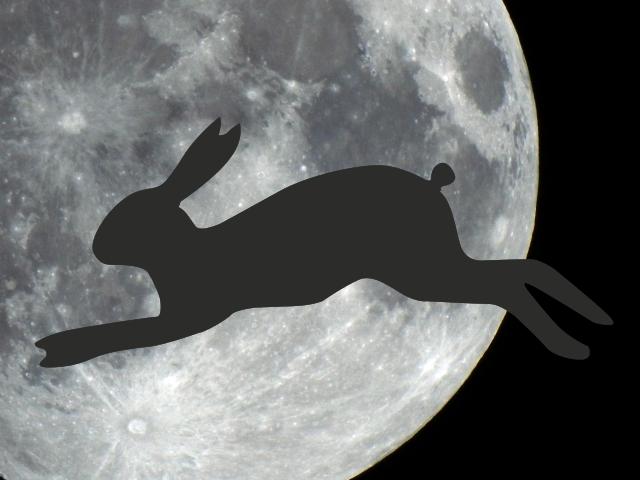 月とウサギ