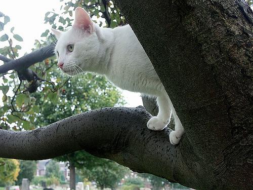 枝の上の白猫